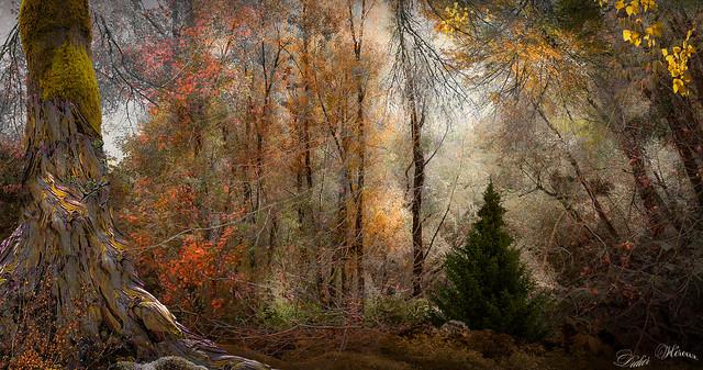 Balade automnale en forêt