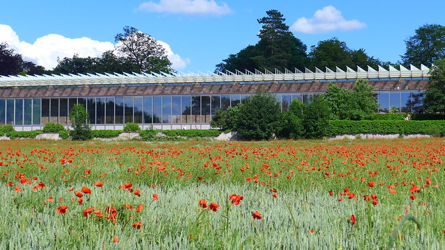 flowers in front of Fondation Beyeler