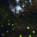 Nocturnal lights