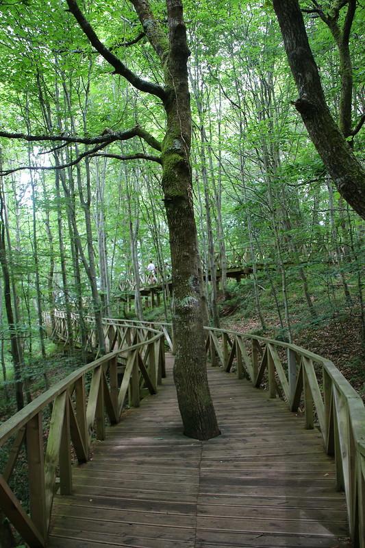 Abrazando sequoias en Cabezón de la Sal (Cantabria)