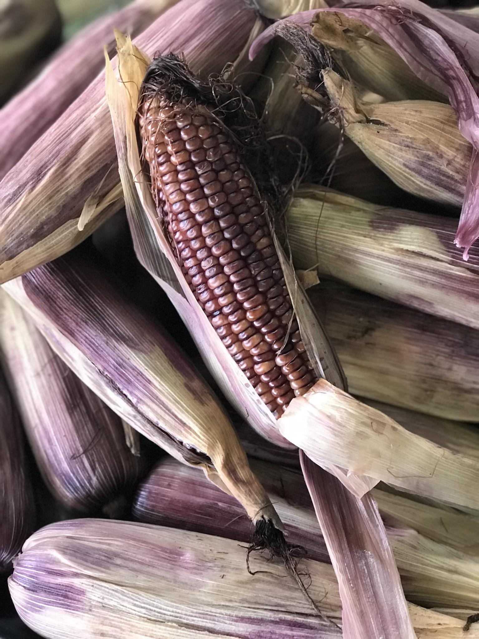 sebul-farm-lake-sebu-purple-corn.jpg
