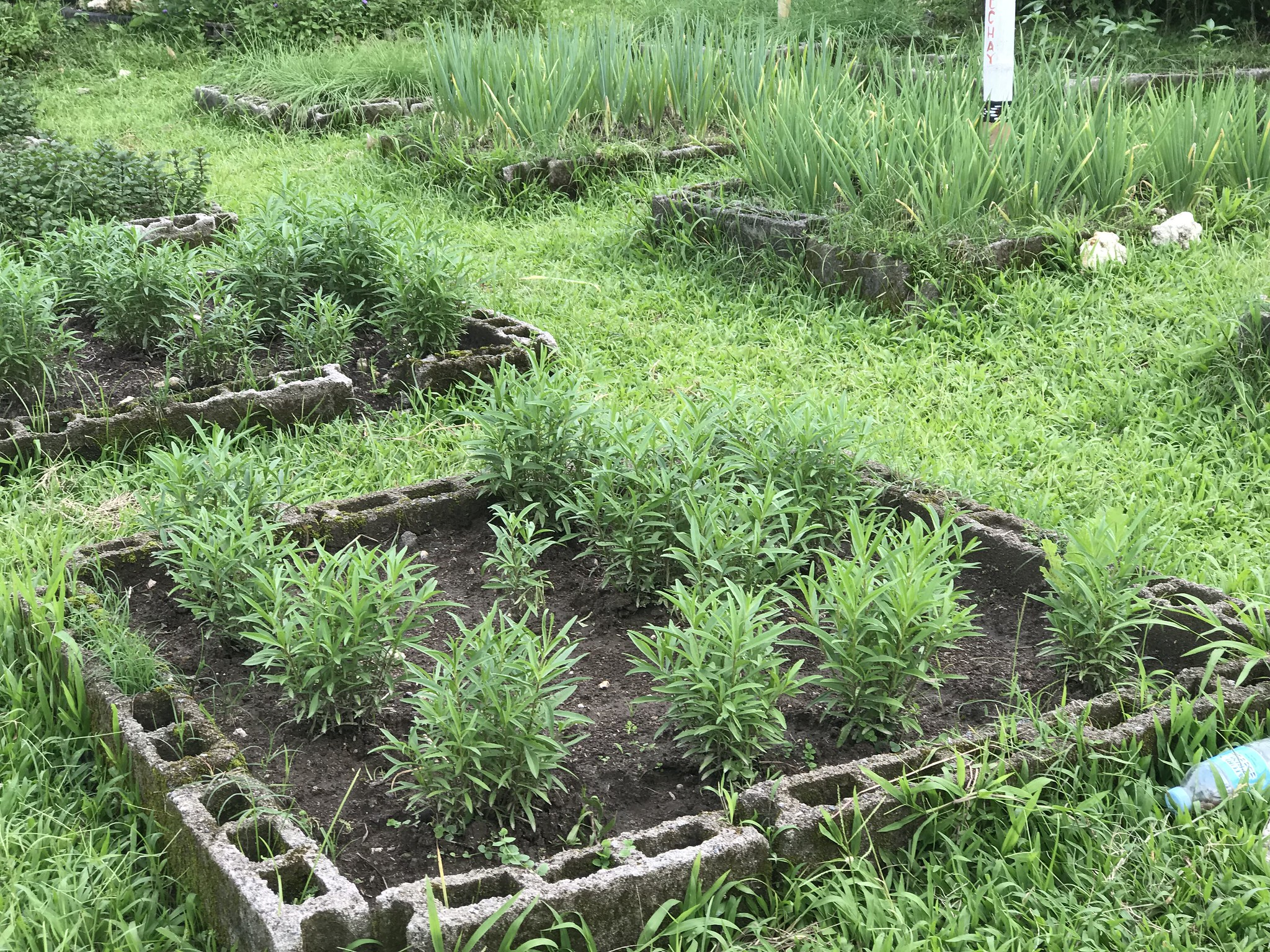 sebul-farm-lake-sebu-square-foot-farming.jpg