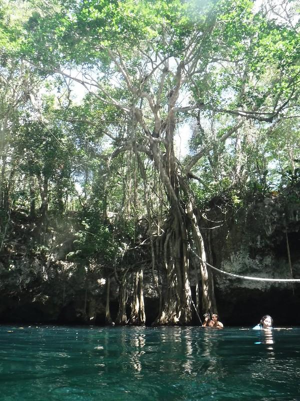Cenote Tree