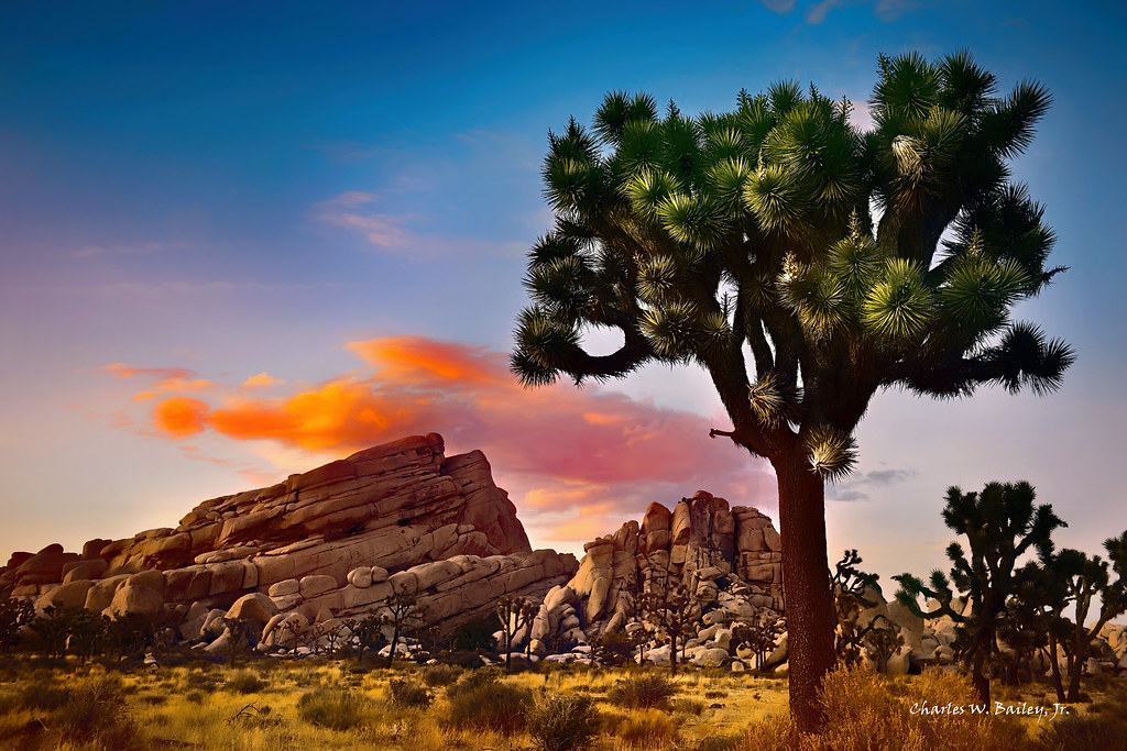 Digital Pastel Drawing of Joshua Trees in the Mojave Desert by Charles W. Bailey, Jr.
