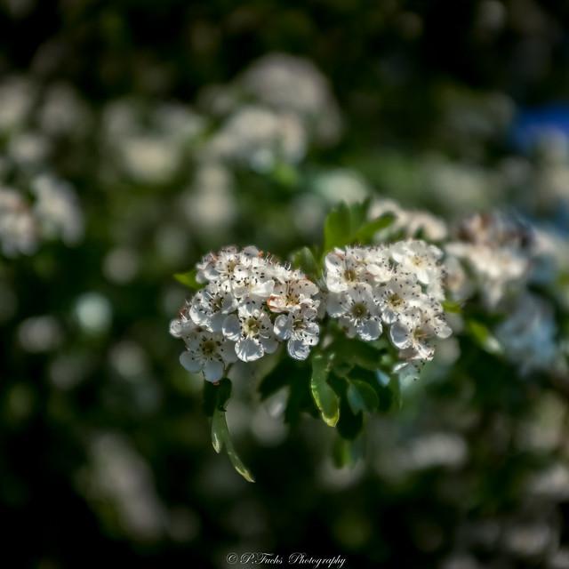 Oderland-Entdeckungen 26