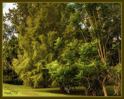 Image of the grounds at the Harry P. Leu Gardens in Orlando, Florida