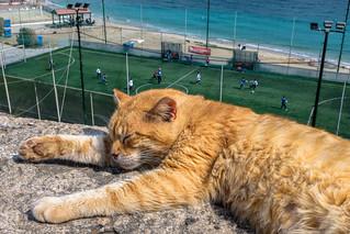 Gulliver's Cat