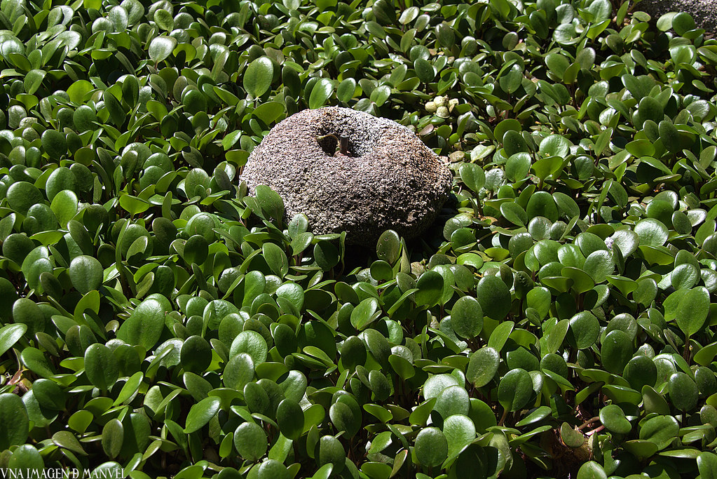 un fontín rodeado por plantas acuáticas