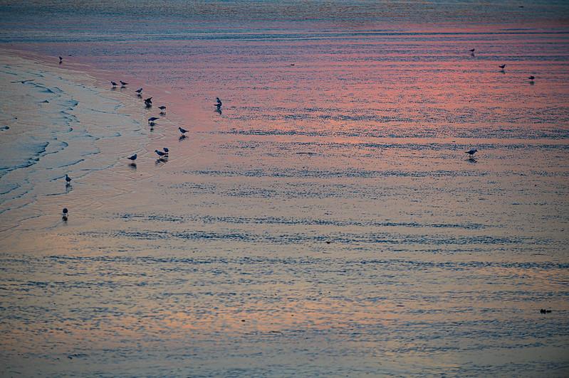 Birds by sunset