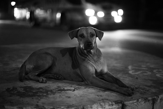 A Candid Portrait Of A Stray Dog