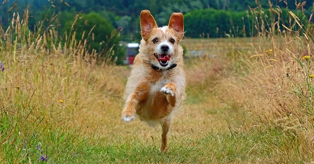 One very happy dog. [Explore]
