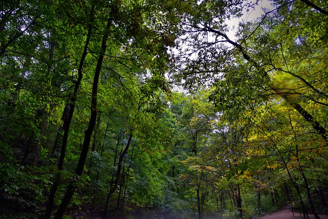 Friends Are All Amongst in in the Trees of the Forest (Mammoth Cave National Park)