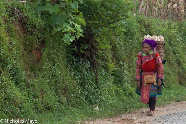 Hmong Woman Carrying Corn Home