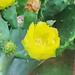 Kaktus in Gruene TX 2.5.2019 0592
