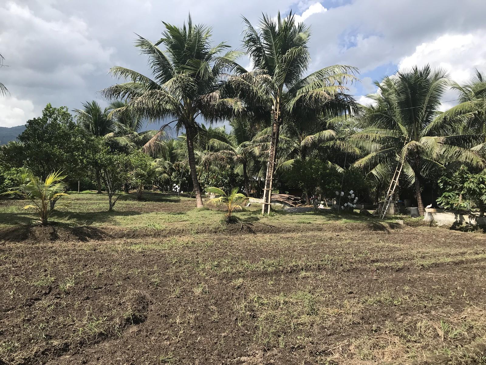 gernils-farm-organic-koronadal-south-cotabato