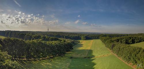 mariendaal arnhem gelderland glk green panorama park sunrise nikond500 groenebedstee trees cattle landscape