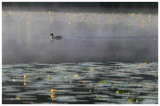 Omulew Lake, Masuria (Poland)