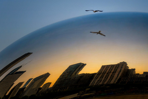 sunset evening goldenhour millenniumpark thebean cloudgate reflections skyline distortion architecture buildings highrises skyscrapers gull seagull flight bird freedom wings horizon may spring chicagoillinois cityofchicago downtown cookcounty urban cityscape thewindycity chitown theloop sky mirrored sphere globe nikond7500 sigma18300 photoshopbyfehlfarben thanksbinexo