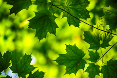 Layered Leaves