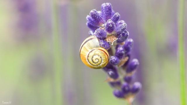 Snail - 6978