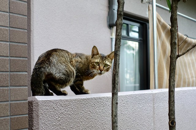 Today's Cat@2019-06-23