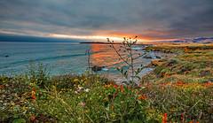 Coastal Color