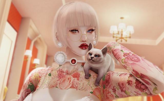 ' | Classy Cat