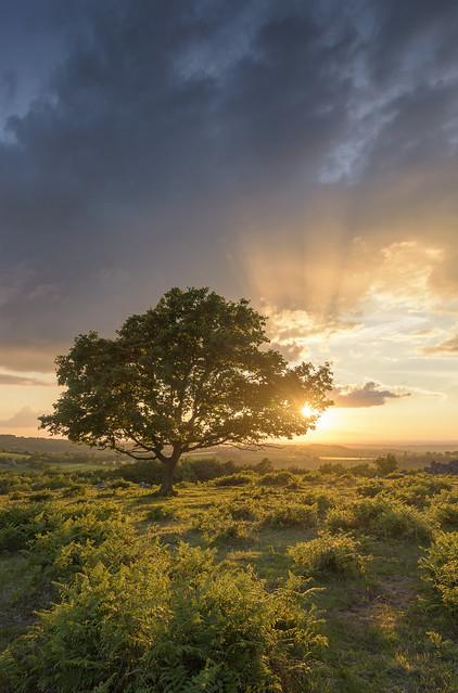 Beacon Hill Sunset