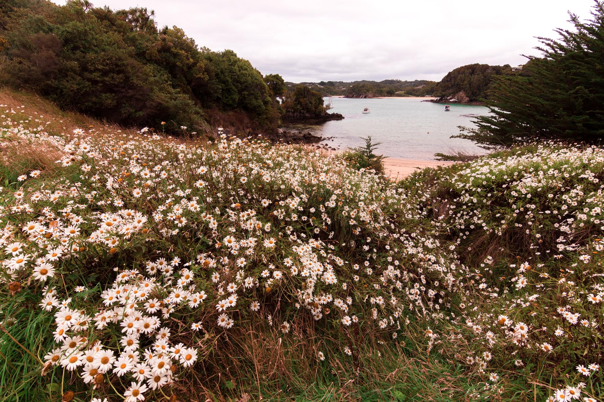 Stewart island-3