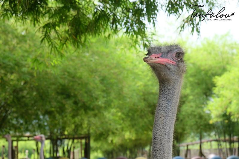 Ostrich Wonderland (8)