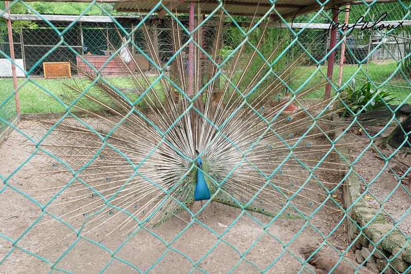 Ostrich Wonderland (14)
