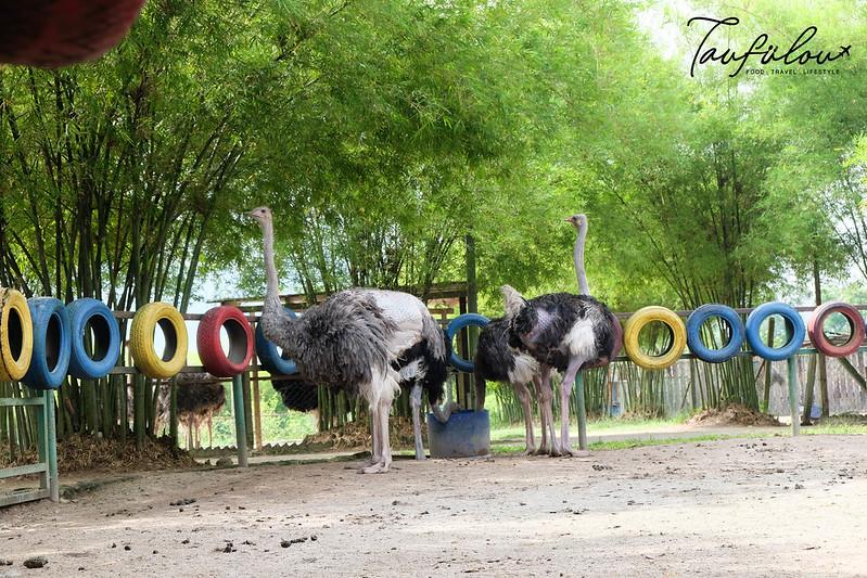 Ostrich Wonderland (5)