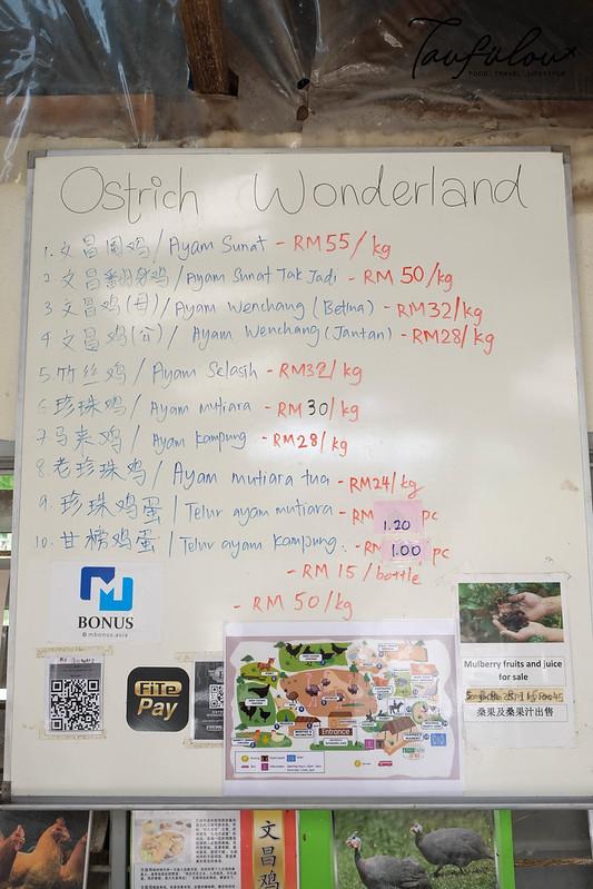 Ostrich Wonderland (3)