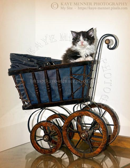 Kitten in Pram Vintage by Kaye Menner