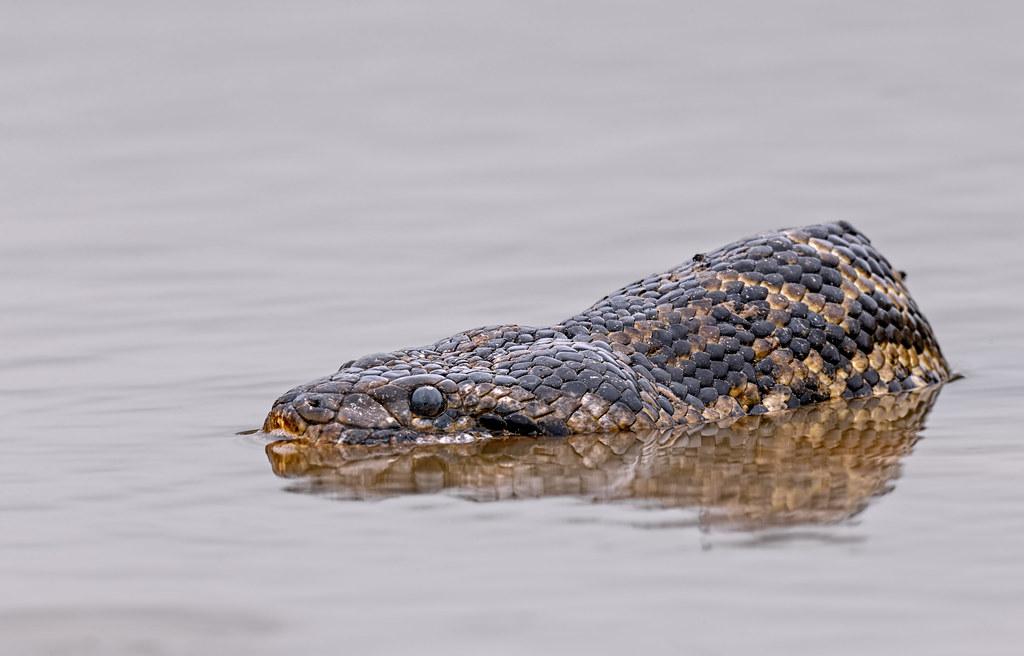 Pantanal_4088
