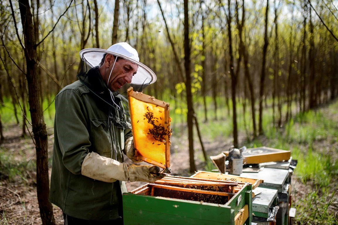 Hatmilliárd forintos támogatást kap a magyar méhészeti ágazat