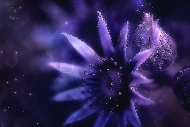 Purple beauty. A Slider:-)
