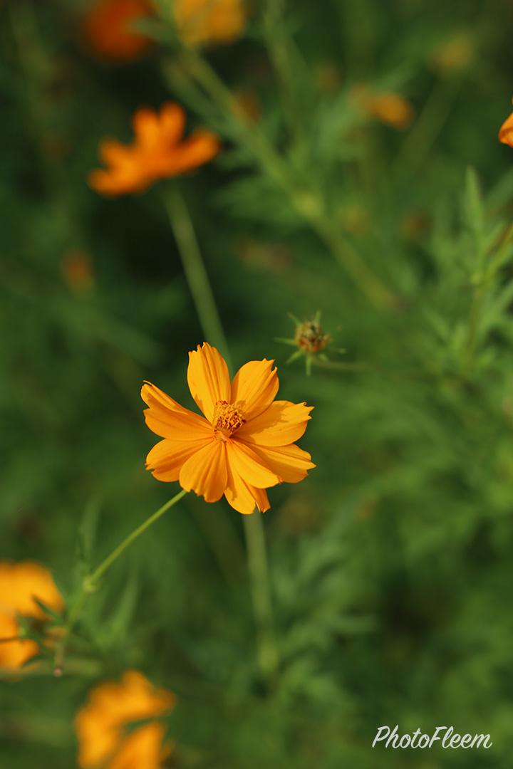 ภาพถ่ายดอกไม้ กล้อง EOS RP เลนส์ RF 24-105 F4L