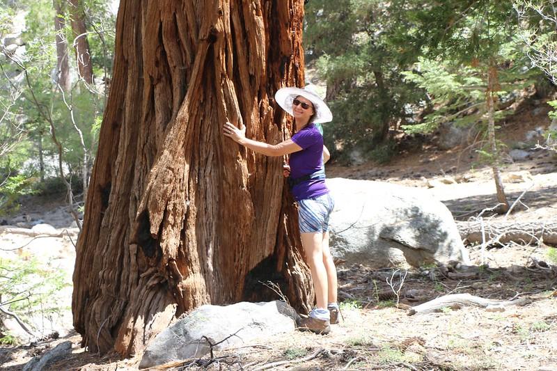 Vicki hugging a huge old Cedar Tree near the creekbed at Caramba Camp