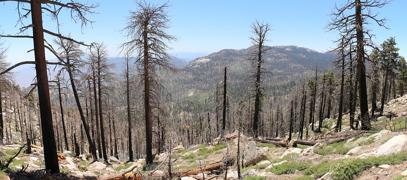 Burned trees in Tahquitz Valley due to the Mountain Fire, from high on the Willow Creek Trail