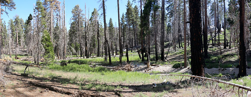 273 Green grass along Willow Creek where the Laws Trail reaches Laws Camp | by _JFR_