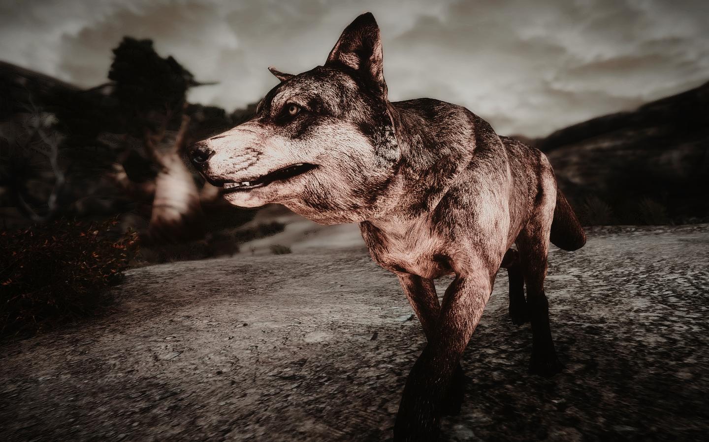 Fallout Screenshots XIII - Page 43 48116390237_17b1473765_o