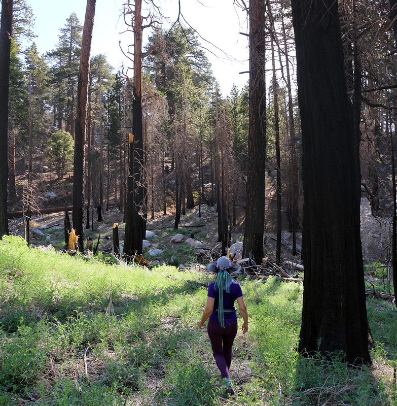 The unmaintained Caramba Trail almost disappears as it descends to the first of several creek crossings