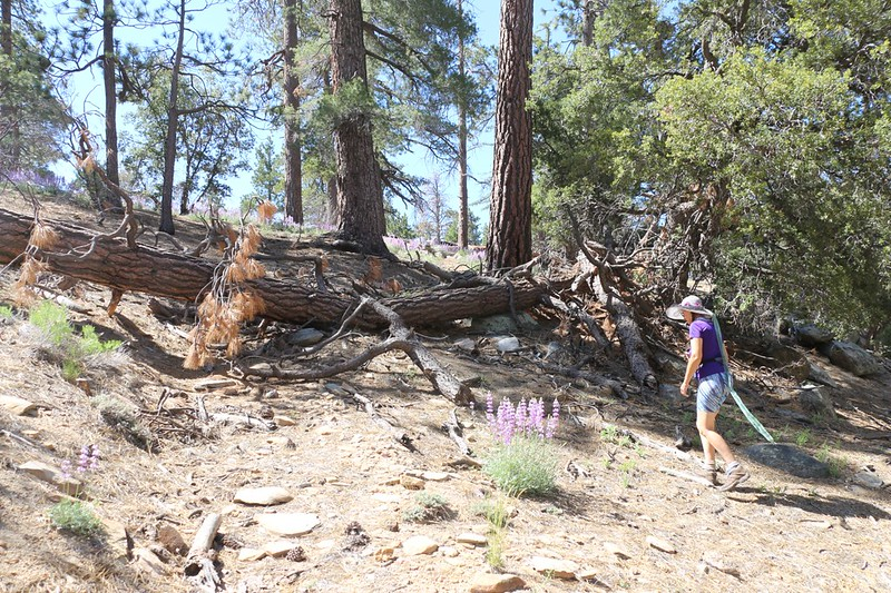 There were plenty of places where downed trees blocked the unmaintained Caramba Trail