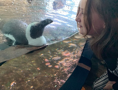 Saying hi to penguins. From 7 Tips for Making the Most of Your Visit to the Monterey Bay Aquarium
