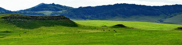 Montana - Augusta - Cattle life in the grassland 3