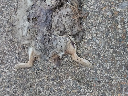 dead rabbit 2
