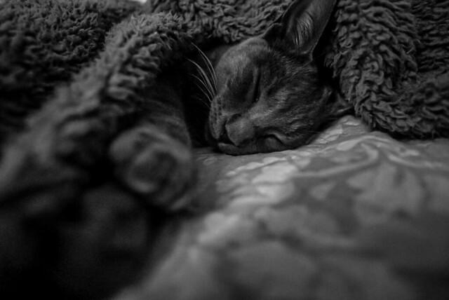 #cats #gatos #lovecat #bw #byn