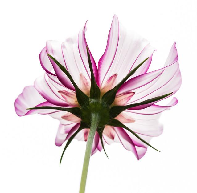 Flower-0649