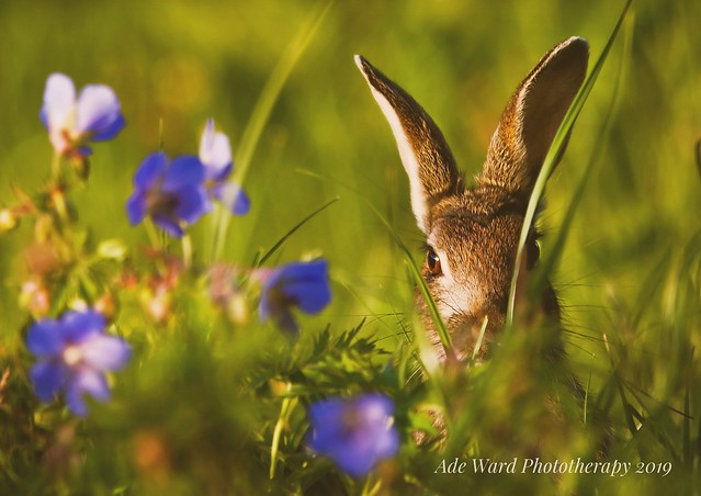 Rabbit among the flowers